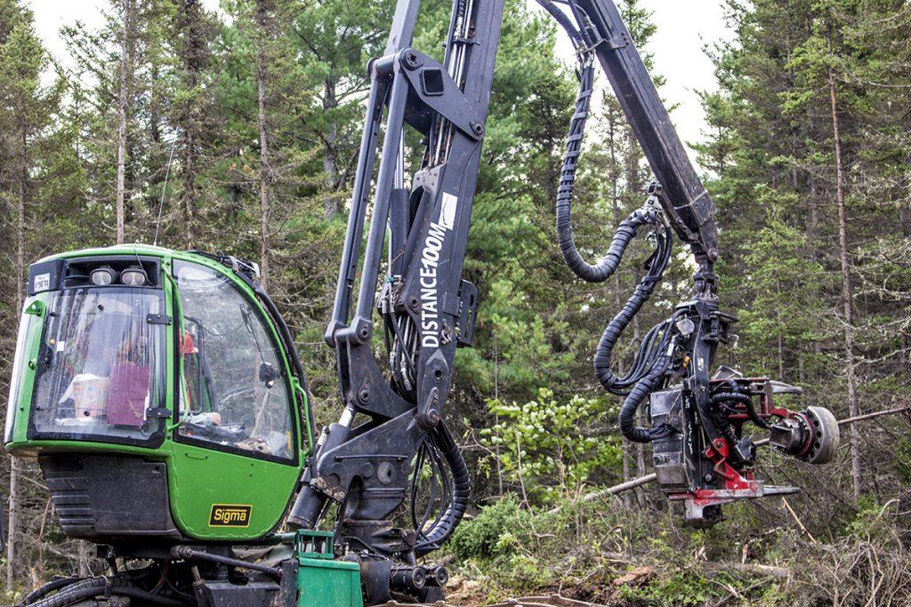 Aménagement de la forêt